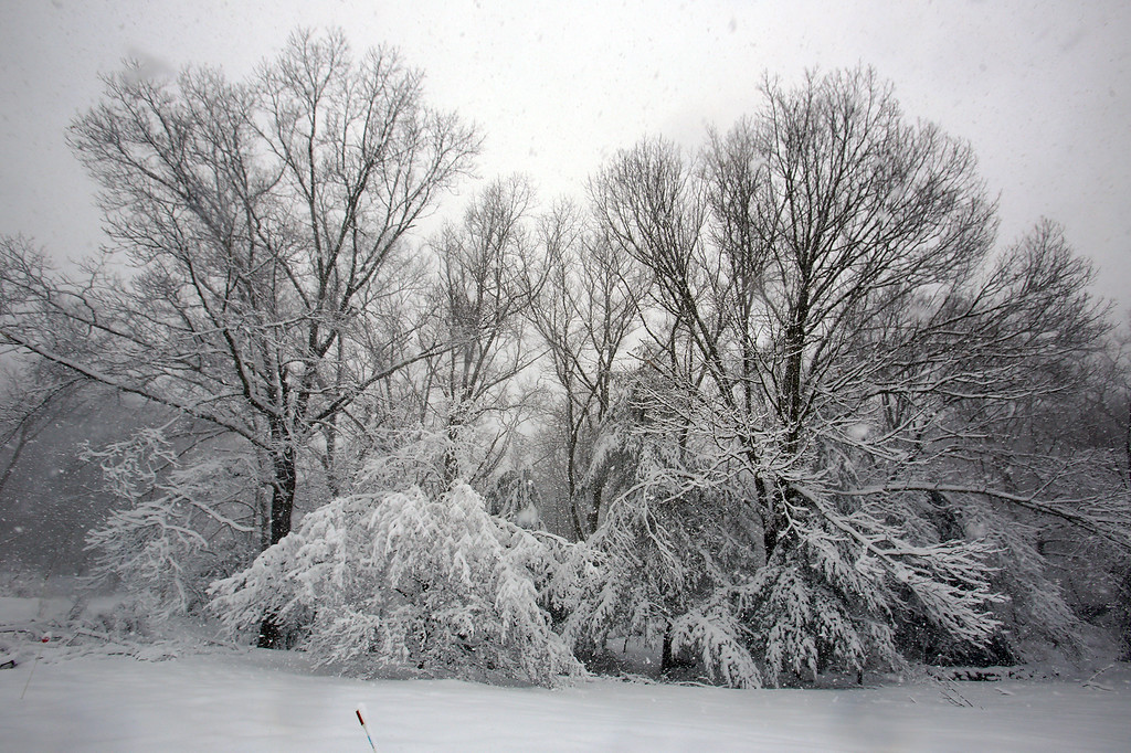. Trees on west end of Conestoga Road in Chelmsford.   (SUN/Julia Malakie)