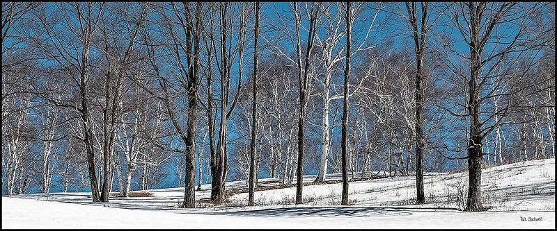 Winter Birches skyline #4