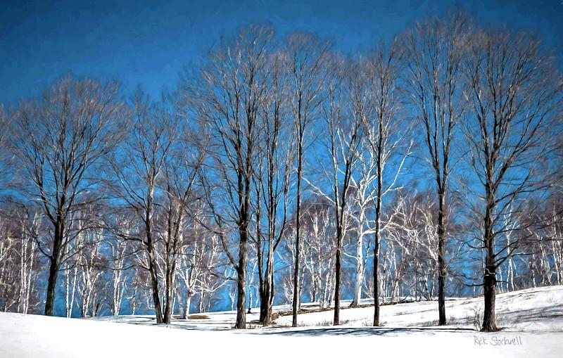 Winter Birches skyline #2