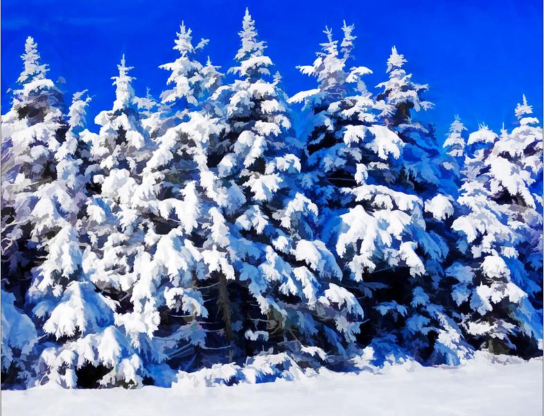 Snow Spruce #2