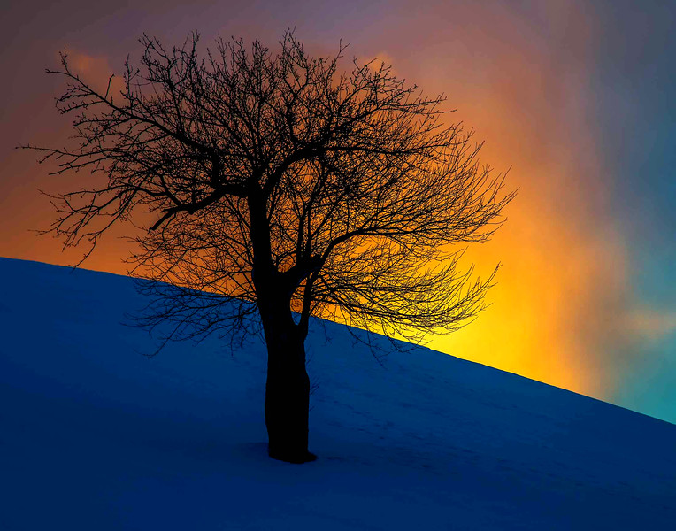 lone Apple sunset