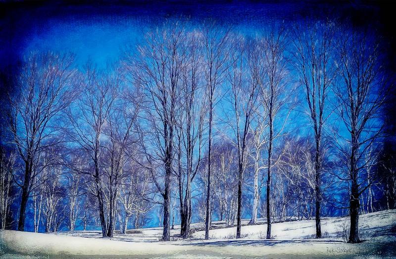 Winter Birches skyline #3