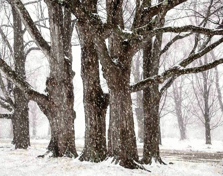 Old Giants embracing winter
