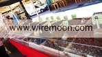 Olives, March� aux Fleurs, Cours Saleya, Nice.