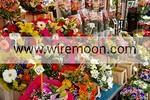 Flowers, March� aux Fleurs, Cours Saleya, Nice.