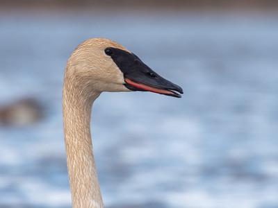 Kimmes-Tobin Wetlands Gordon Macquarrie Douglas County WI P1033101
