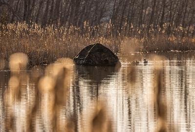Ryan Marshik floating blind Tobin-Kimmes Gordon Macquarrie Wetlands Douglas County WI IMGC6251
