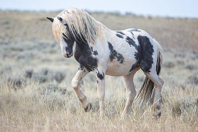Thor - McCullough Peaks Wyoming