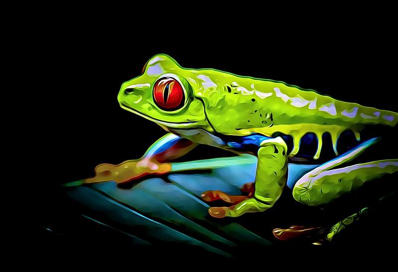 Red Eyed Tree Frog (1 of 1).jpg
