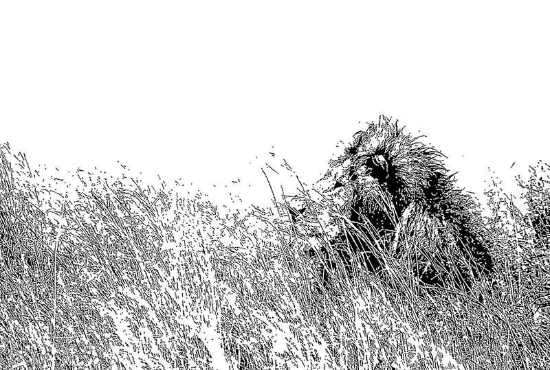 Lion in the Tall Grass_ART.jpg