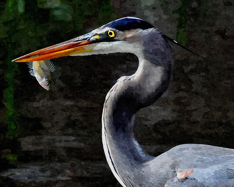 Great Blue Heron-ART.jpg