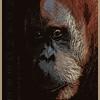 Orangutan Endangered Species #1