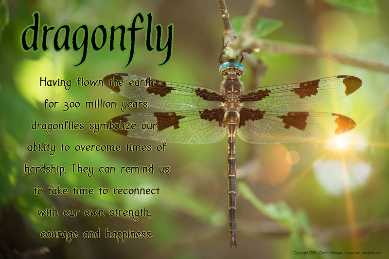 A summer Dragonfly hangs from a twig within the shade of a large oak tree in Texas.