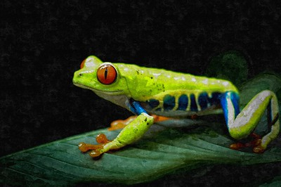 Red-Eyed Tree Frog Art