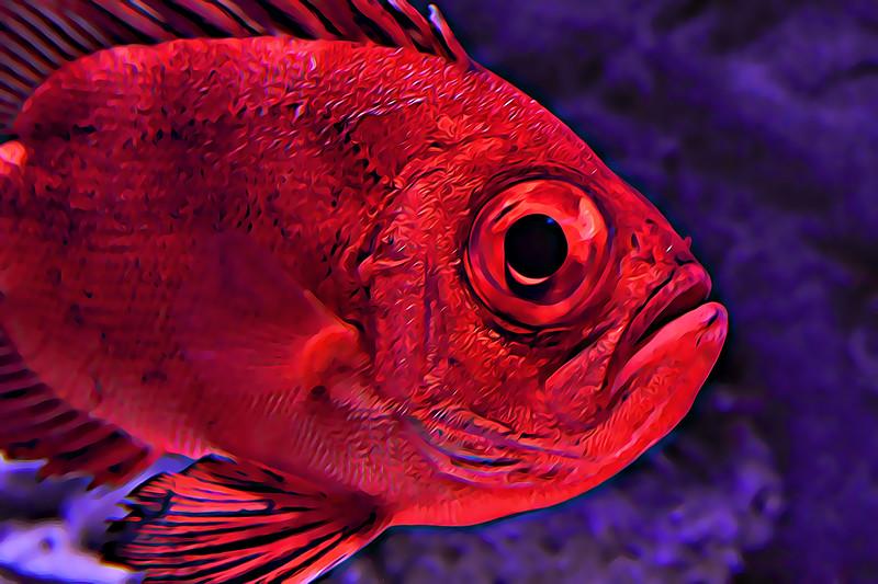 Big Eyed Red Fish 2011.jpg