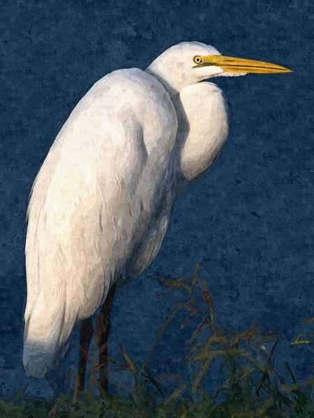 Great Egret ART.jpg
