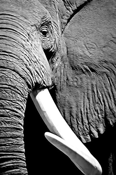 African Elephant 2009.jpg