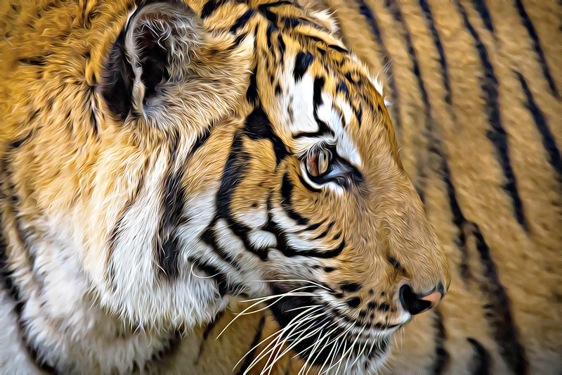 Bengal Tiger 2015.jpg
