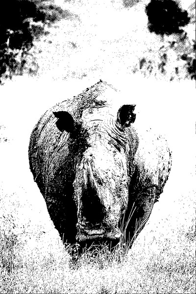 White Rhino_ART.jpg