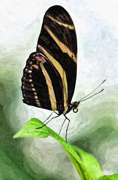 Butterfly 2012_ART.jpg