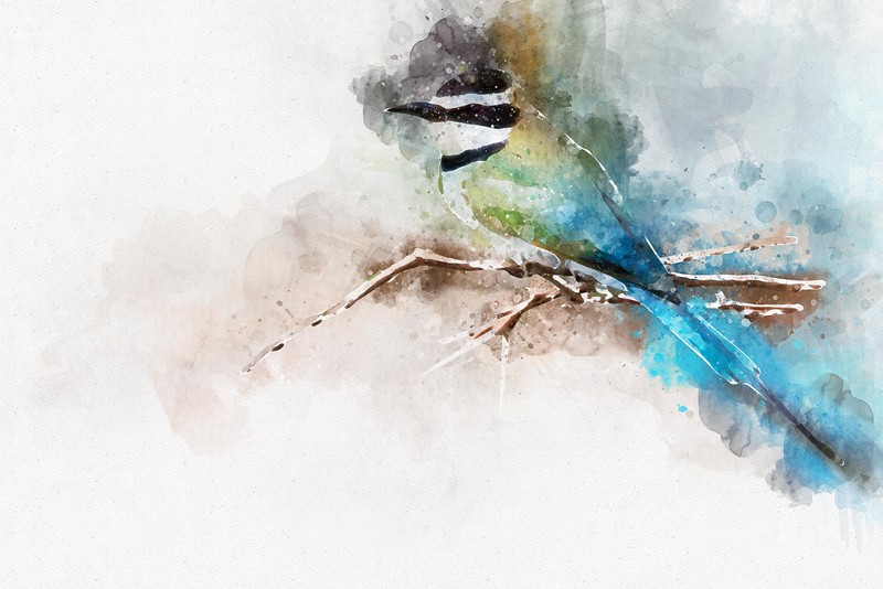 Bird Watercolor.jpg