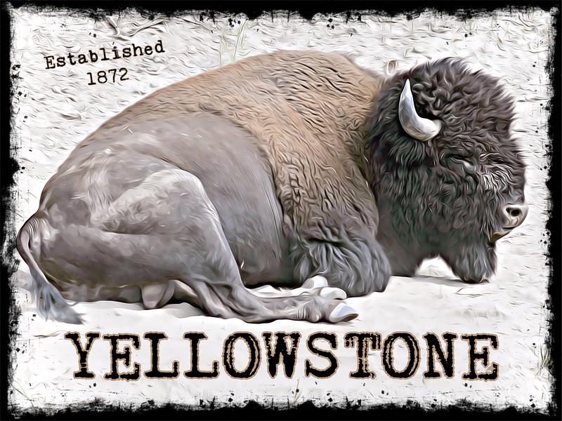 Poster Bison Yellowstone.jpg