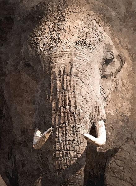 African Elephant Closeup_ART.jpg