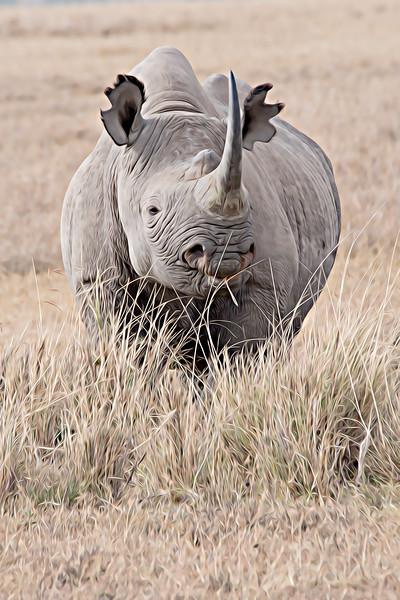 Black Rhino Lake Nakuru_.jpg