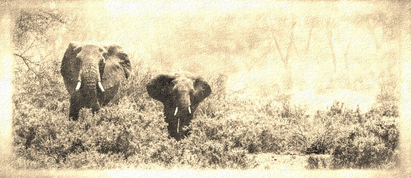 Elephants ComingRetro2_FotoSketcher.jpg