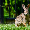 Hello Bunny!