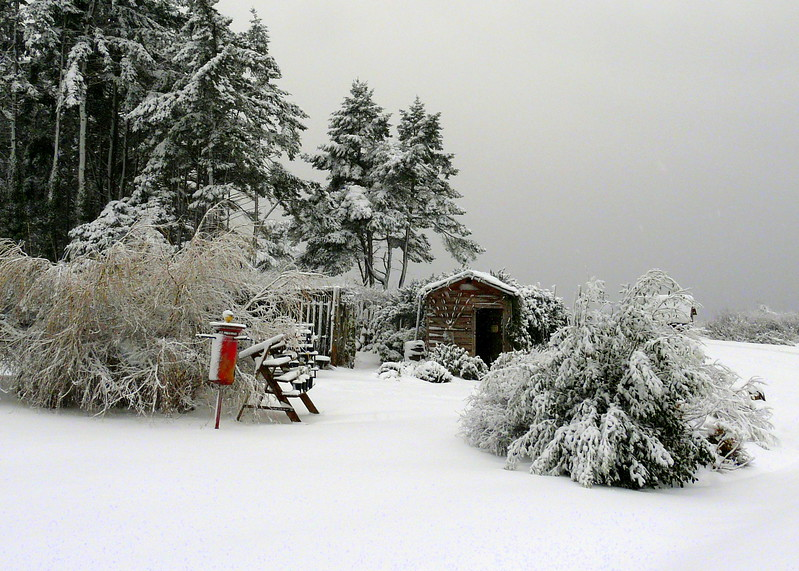 Cottagegardeninsnow1
