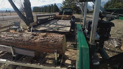 March 15th - Milling the last 2 pine logs from the Mt. Burn Pile