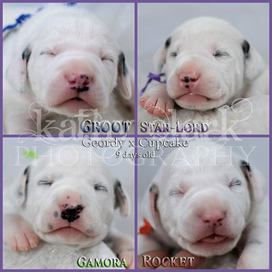 Geordy x Cupcake 9 day old Collage