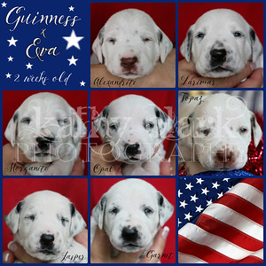 Guinness x Eva 2 week Collage
