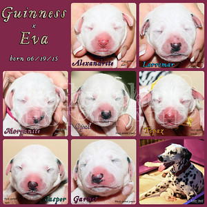 Guiness x Eva birthday Collage