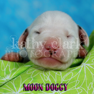 Moon Doggy
