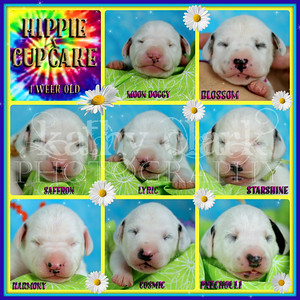 Hippie x Cupcake 1 week collage