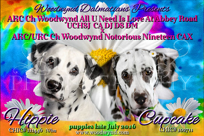 Hippie x Cupcake puppy announcement July 2016
