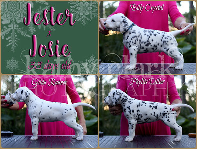 Jester x Josie 33 day old stacked Collage
