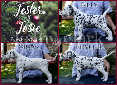 Jester x Josie 6 week stacked Collage