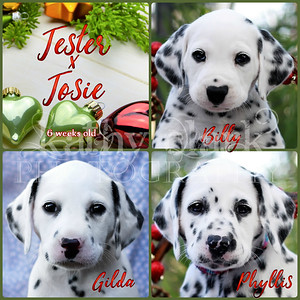 Jester x Josie 6 week Collage