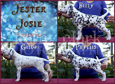 Jester x Josie 7 week Collage
