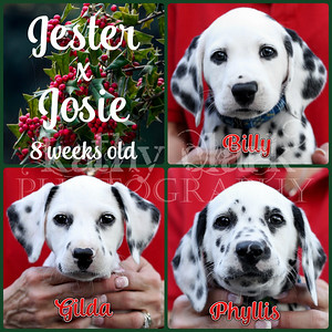 Jester x Josie 8 week face Collage