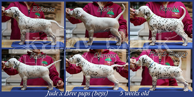 Jude x Bree 5 week stacked Collage boys