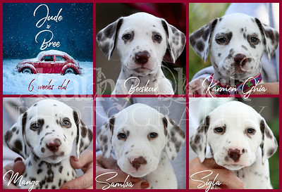 Jude x Bree 6 week face GIRLS Collage