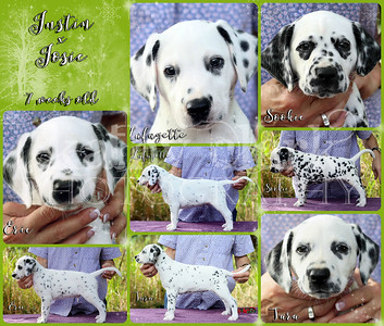 Justin x Josie 7 week Collage