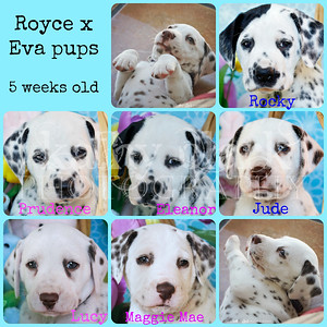 Royce x Eva 5 week Collage