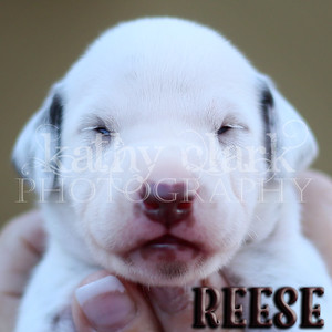 Reese face