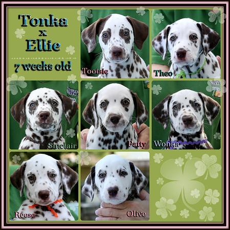 Tonka x Ellie Jan 30 2016