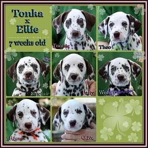 Tonka x Ellie 7 week Collage